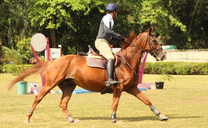Cavaleiro profissional explica como treina os cavalos para ohipismo